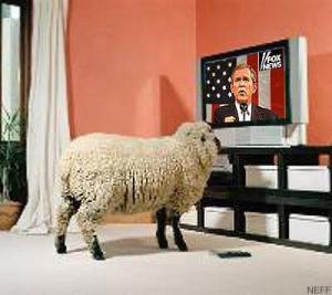 sheep_tv